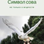 Символ сова - не только о мудрости. Психолог Елена Ковалева